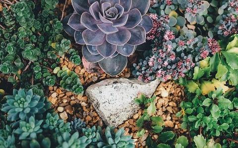 succulents-1030982_640