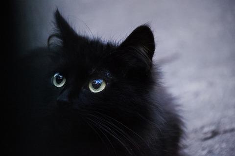 cat-3418832_640