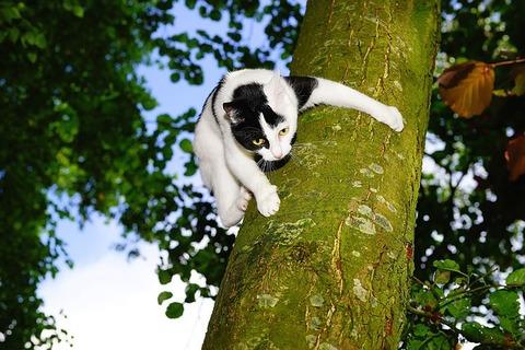 cat-1494924_640
