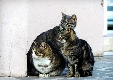 cat-2828505_640