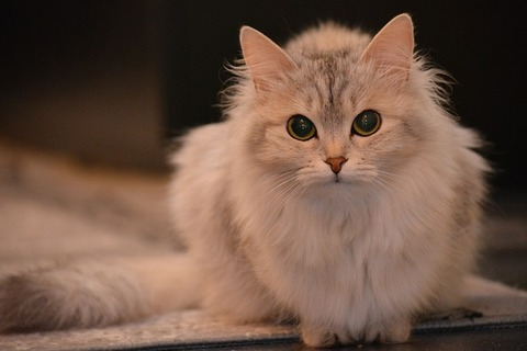 cat-2146089_640