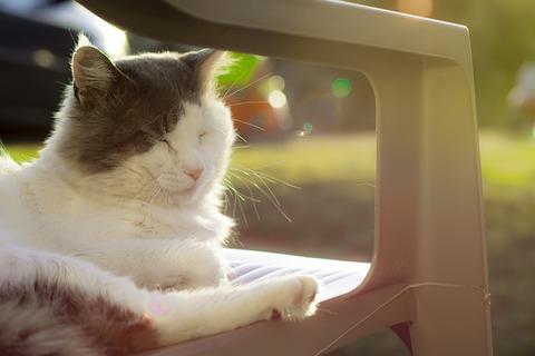 cat-1017455_640