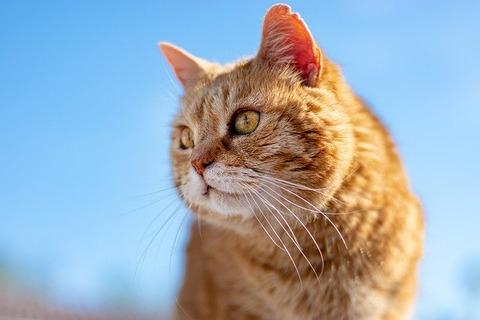 cat-5183427_640