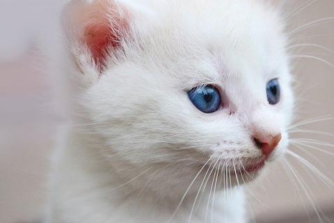 cat-2225448_640 (1)