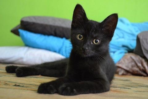 cat-907749_640