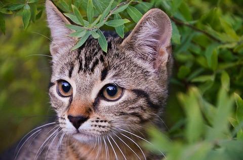 cat-3895178_640