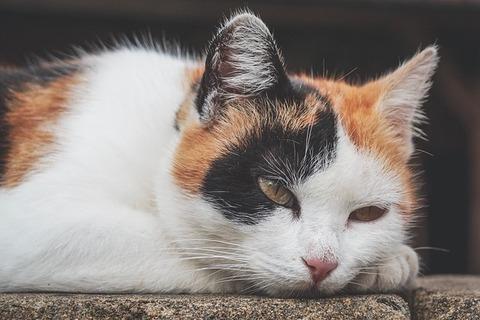 cat-3628045_640