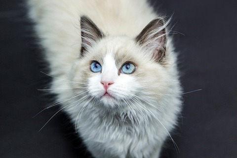 cats-1040954_640