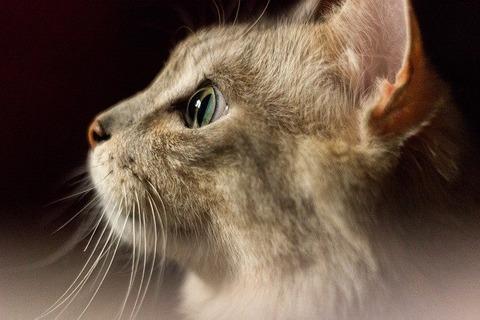 cat-3919681_640