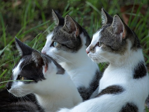 cats-238217_640