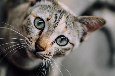 cat-face-1081951_640