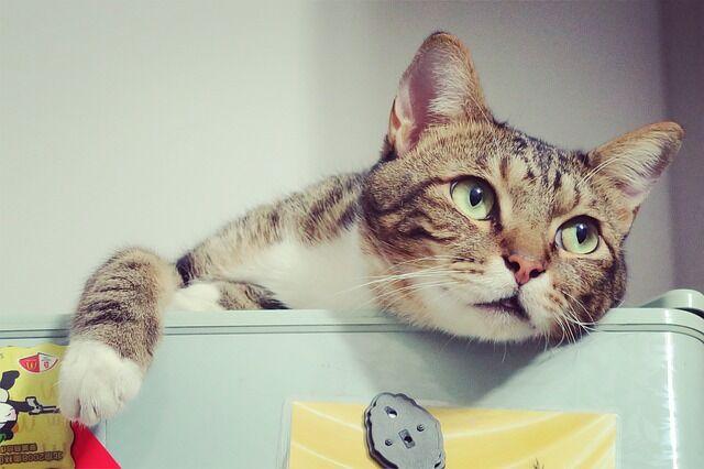 ハライチ岩井 猫