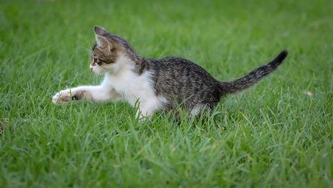 cat-4226750_640