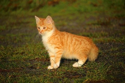 cat-1074644_640