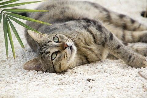 cat-1779781_640