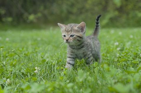 kitten-2630518_640