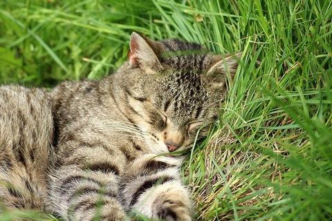 cat-3373439_640