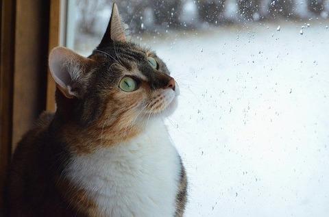 cat-2585514_640
