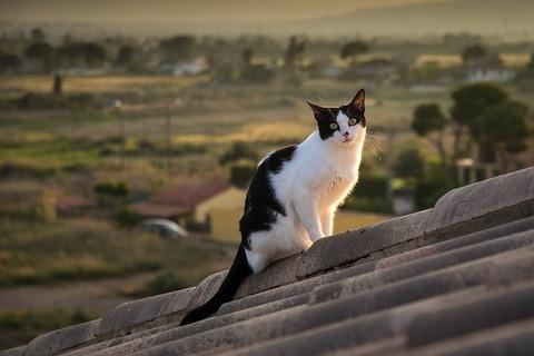 cat-3431409_640