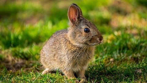bunny-5014814_640