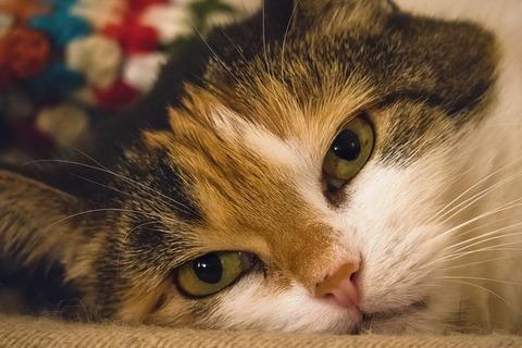cat-3710521_640