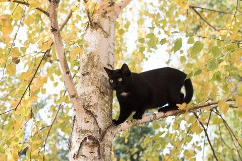 kitten-3085656_640