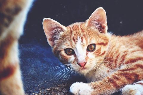 cat-907495_640