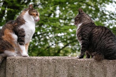 cat-817798_640