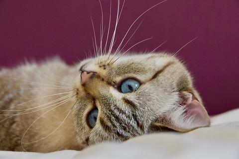 cat-4088174_640