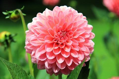 flower-197343_640