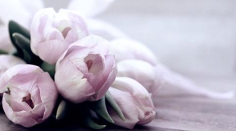 tulips-4072214_640