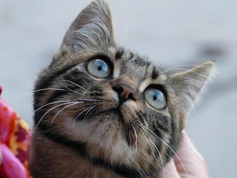 cat-64487_640