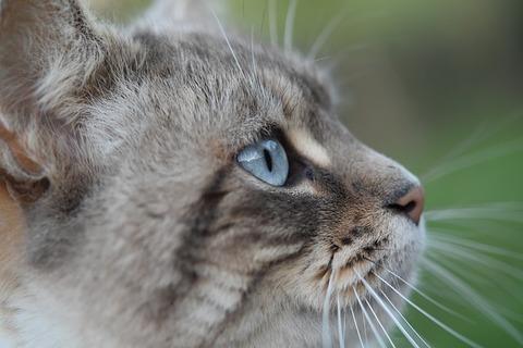 cat-4081959_640