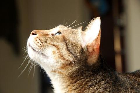 cat-2159839_640