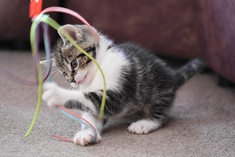 cat-4262737_640