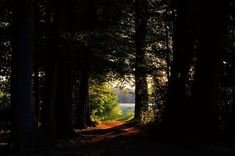 forest-glade-2524495_640