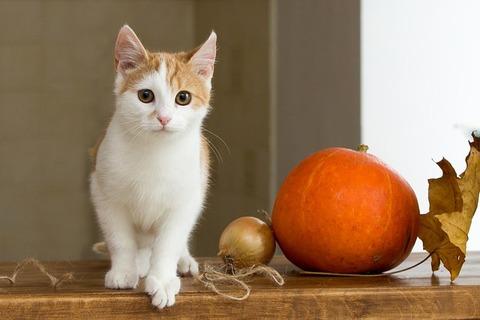 cat-2908286_640