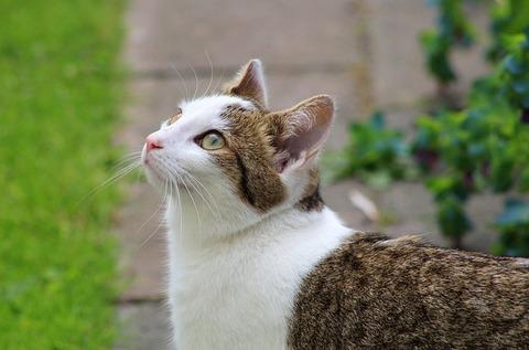 cats-3911504_640