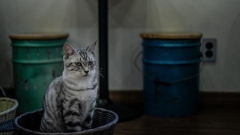 cat-4165354_640 (1)