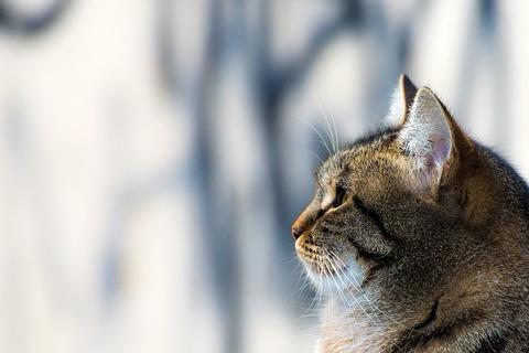 cat-438455_640