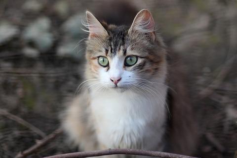 cat-3280534_640