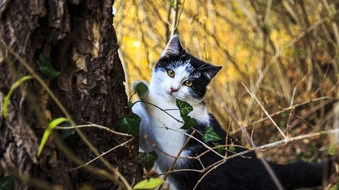 cat-portrait-2973898_640