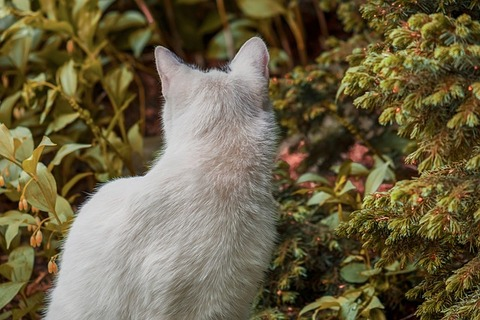cat-3386529_640