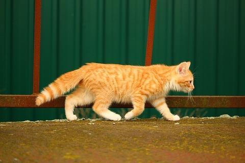cat-1094292_640