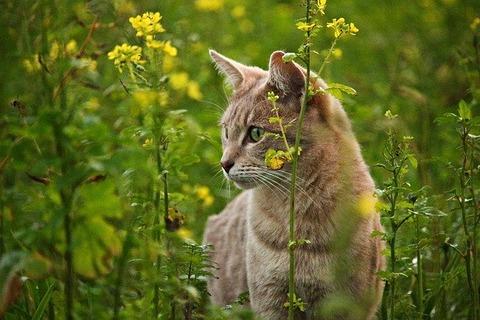 cat-1803904_640