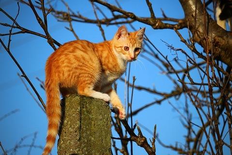 cat-1230244_640