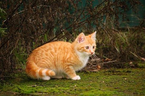 cat-1094335_640