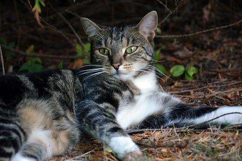 cat-3688868_640