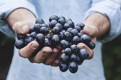 ブドウの鮮度が長持ちする方法が話題!反応まとめ