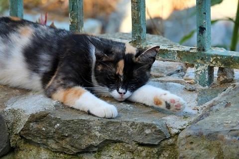cat-1694274_640